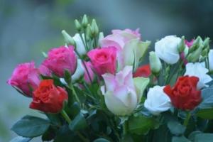 Rosen im Strauß